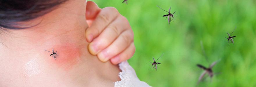 Moustiques en été